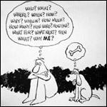 О чем думают собаки?