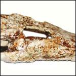 Новый вид ископаемых крокодилов был обнаружен учеными в Таиланде