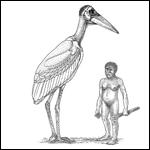 В древности на острове Флорес жили аномально большие птицы