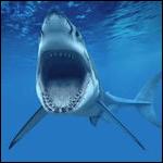Необычное решение проблемы с акулами предложили ученые из Новой Зеландии и ЮАР