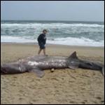 Пьяному и море по колено, и акула по плечу, а точнее по пятой точке