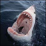 """Ученые отрицают, что """"черноморская акула"""" - реальна."""