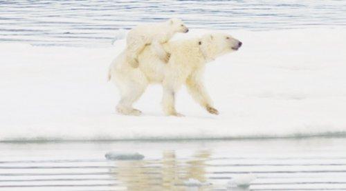 Удивительный феномен обнаружили ученые в Арктике!