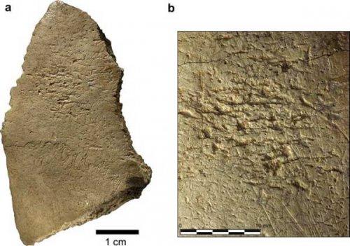Древние люди использовали череп как орудие труда?