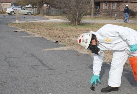 Больше тысячи мертвых дроздов упали над одним из городов штата Арканзас