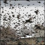 Стало известно из-за чего умирают птицы