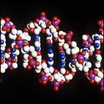 Был выявлен ген регулирующий сердечный ритм