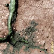 Марс и его Стеклянные черви