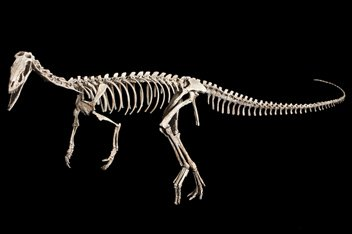 Команда палеонтологов обнаружила нового длинноногого динозавра