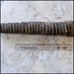 Были обнаруженны останки не известного ранее вида кальмаров