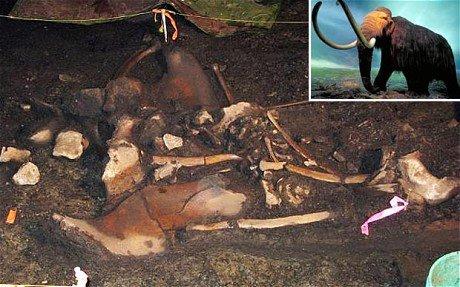 В Колорадо были обнаруженны остатки мамонта