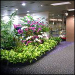 Растения смогут определять наличии взрывчатых веществ
