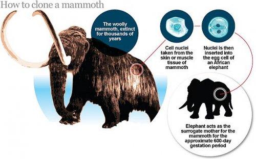 Через четыре года мы сможем увидеть самого настоящего живого мамонта