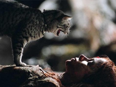 Кошки умеют манипулировать людьми?