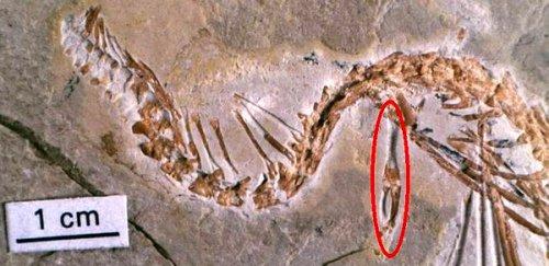 Ученые раскрыли тайну происхождения змеи