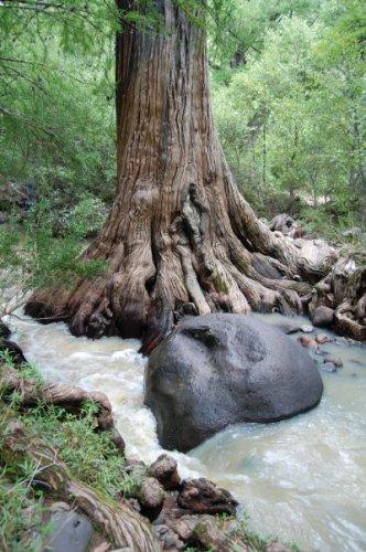 """Деревья """"нашептали"""" тайну исчезновения Месоамерики"""