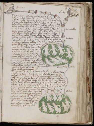 Группа физиков из Университета Аризоны определила возраст манускрипта Войнича