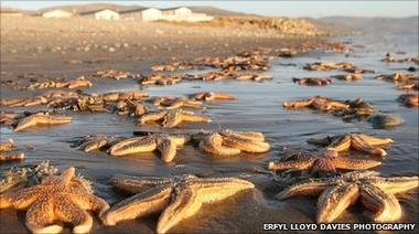 Отмечены сразу несколько случаев необъяснимой массовой гибели рыб и птиц