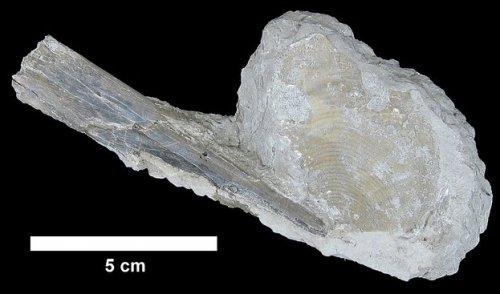 Палеонтологи обнаружили в Техасе древнейшие кости птеранодона