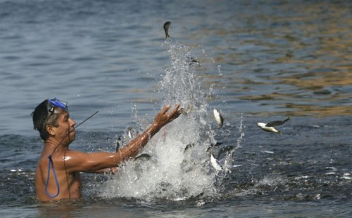 Странное скопление рыб было замеченно в Мексике