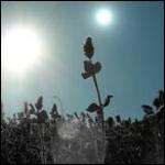 Джек О`Малли-Джеймс  считает, что растения на экзопланетах, которые обращаются вокруг красных карликов, могут иметь черные листья и цветы