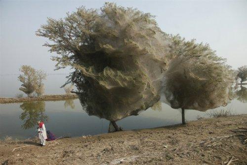 Облака вместо кроны: аномалия в Пакистане