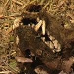 Скелет наизвестного хищника был найден во время сенокоса