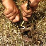 Скелет чупакабры иследовали ученые