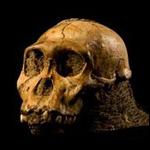 Палеонтологи обнаружили новый вид австралопитеков