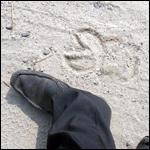 -Я видел чупакабру во время своей вечерней пробежки, — утверждает студент