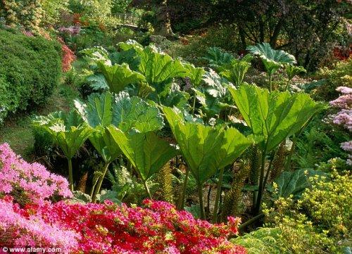 В Великобритании выросли гигантские растения