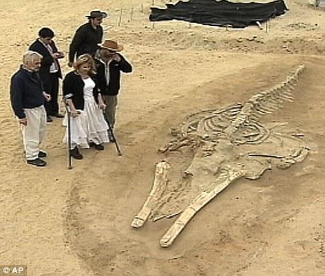 В чилийской пустыне Атакама местные ученые обнаружили скелеты 75 китов