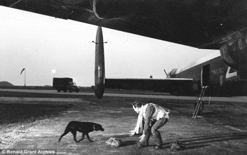 Призрак собаки охраняет памятник, где была захоронена