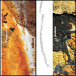 Палеонтологи восстановили стрекот древних кузнечиков