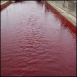Река в области Фарн-аль-Шаббак (Furn al-Shubbak) стала кроваво-красной