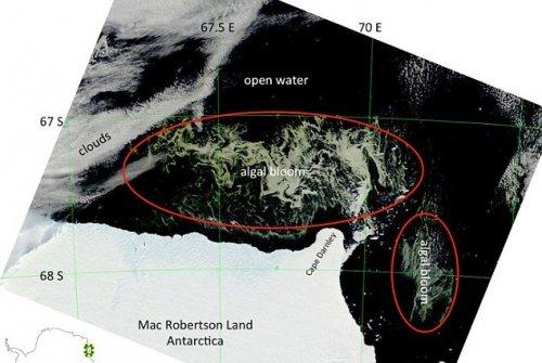 Возле Антарктиды обнаружили участок заросший водорослями