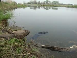 На берегу ханкайских каналов выловили двуххвостого карася