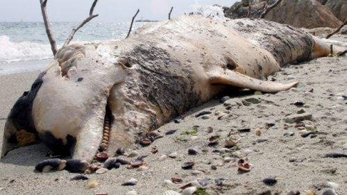 Дельфинов убивает маньяк?