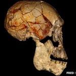 В Африке около 2 млн лет назад могли сосуществовать, по меньшей мере, три разных ископаемых вида людей