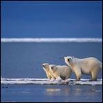 Глобальное потепление положительно сказывается на видовом разнообразии