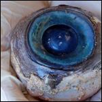 Гигантское глазное яблоко размером с грейпфрут было выброшено морем на пляж Помпано Бич