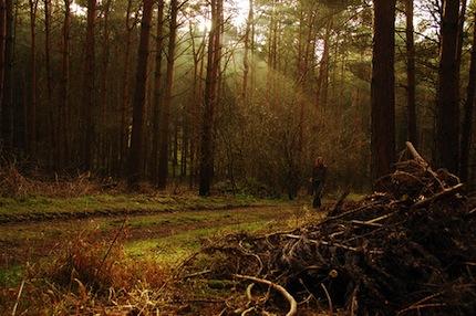 Самые страшные леса мира