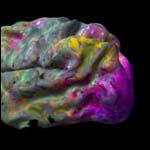 Японские нейробиологи научились предугадывать визуальное содержание сновидений