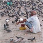 Более пятисот голубей вдруг упали замертво в деревне Бат