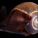 На небольшом участке Южного океана растворяются раковины морских улиток