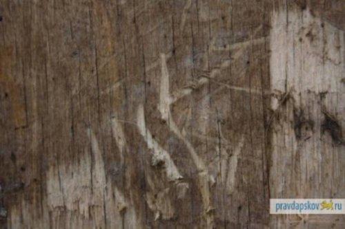 В Дновском районе Псковской области бушует кровососущее чудовище