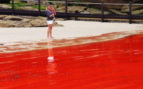 Австралию атаковали красные водоросли