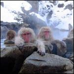 Эффект 100-ой обезьяны