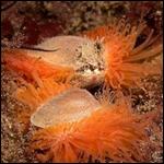 Это вновь открытое чудо природы, живой естественный риф, который состоит из 100 млн. ярких моллюсков
