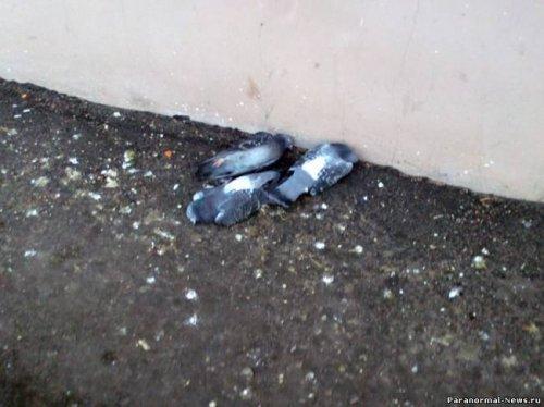 Тайна загадочной массовой смерти птиц